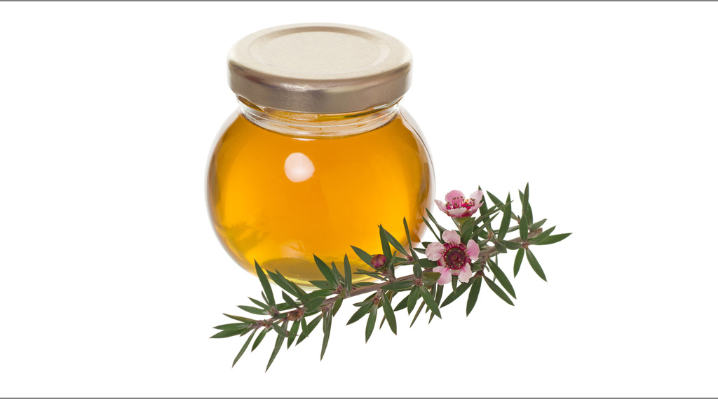 jar of honey with manuka (tea tree or Leptospermum) flower